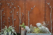 Cor-Ten steel screen designed by Jay Cockrell, Senecio cineraria 'Silver Dust', astelia