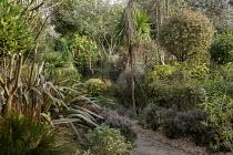 Pseudopanax ferox, Rhamnus alaternus 'Argenteovariegata', Phormium tenax 'Sundowner', Pyrus salicifolia 'Pendula', Corokia buddlejoides 'Coco', Baloskion tetraphyllum