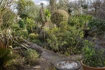 Pseudopanax ferox, Rhamnus alaternus 'Argenteovariegata', Phormium tenax 'Sundowner', Pyrus salicifolia 'Pendula', Corokia buddlejoides 'Coco'