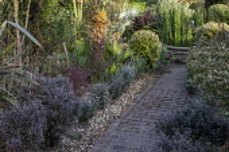 Corokia buddlejoides 'Coco', Equisetum hyemale around raised pond, Brahea armata, Corokia x virgata 'Sunsplash', Chamaerops humilis, Lophomyrtus x ralphii 'Kathryn', Lophomyrtus x ralphii 'Magic Drago...