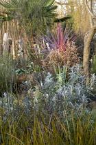 Cordyline australis 'Charlie Boy', Senecio cineraria 'Silver Dust', Chamaerops humilis, Corokia × virgata 'Welsh Whiskey', Libertia peregrinans