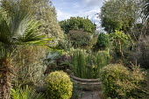 Equisetum hyemale around raised pond, Brahea armata, Corokia x virgata 'Sunsplash', Chamaerops humilis