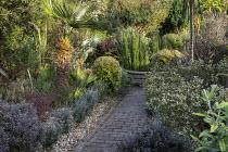 Corokia buddlejoides 'Coco', Equisetum hyemale around raised pond, Brahea armata, Corokia x virgata 'Sunsplash', Lophomyrtus x ralphii 'Kathryn', Chamaerops humilis, Lophomyrtus x ralphii 'Magic Dra...