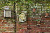 Stone lion mask, bird box and snowdrops in pots on brick wall
