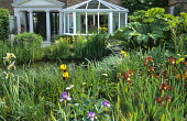 Pond with irises and Gunnera manicata, view to house with conservatory, iris 'Kent Pride'