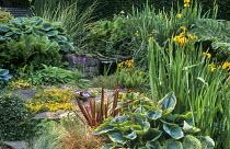 Gravel bed by waterfall, Primula vialii, hostas, phormium, primulas, Iris pseudacorus, violas, ferns
