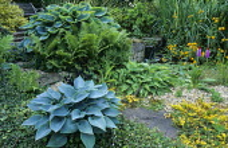 Gravel bed, Primula vialii, hostas, phormium, primulas,