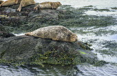 Seal on rocks