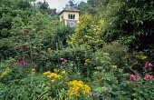Abutilon 'Ashford Red' in border, hemerocallis, phlox, view to clock tower, kitchen garden