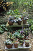 Display of succulent and cactus collection on table