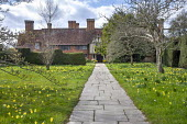 Yorkstone path leading to house, Narcissus pseudonarcissus and crocus naturalised in lawn
