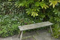 Rustic wooden bench on stone patio, Fatsia japonica, Helleborus x hybridus, Pachyphragma macrophyllum in shady corner