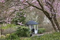 View through Prunus cerasifera 'Nigra' to white painted summerhouse