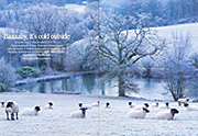 Baaaaby, it's cold outside Country Life 27th November 2013