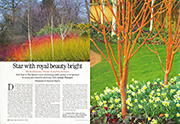 Star with royal beauty bright Country Life 31st December 2014