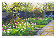 Electric Dreams Gardens Illustrated April 2015