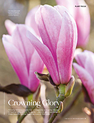 Crowning Glory The English Garden February 2018